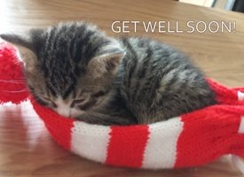 well cats kittens animals sick poorly z%a personalised online greeting card