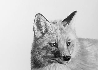EmilyJane Graphite Fox art artwork fox foxes wildlife animals monochrome for-him for-her personalised online greeting card