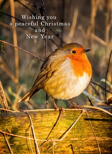christmas year Christmas, Xmas, robin, birds, warm, peaceful, serene, inspiration, happy, joy, optimistic, peaceful, tranquil, serene, warm,  personalised online greeting card