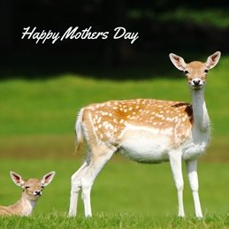 Gary Green Eyes Fallow Deer with young mothers Fallow Deer Fawn photography personalised online greeting card
