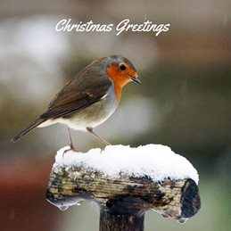 christmas photography Robin personalised online greeting card