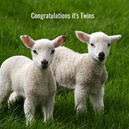 baby photography Twin Lambs Sheep personalised online greeting card