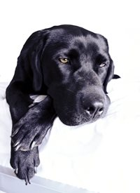General gone, sad, bored, missing you, black labrador,  personalised online greeting card