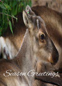 Christmas Deer  z%a personalised online greeting card