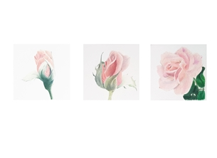 General roses, flowers, FOR HER, mothers day, grandmother, floral, pink, feminine personalised online greeting card