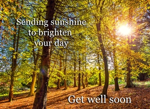 well andbc, Bangor, ireland, ^northern ireland^, woods, sunshine, autumn,  personalised online greeting card