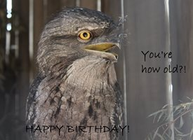 Birthday Humour  joke novelty birds personalised online greeting card
