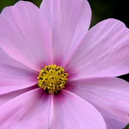 Photography delicate