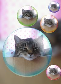 General cat animals z%a personalised online greeting card