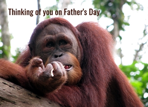 Fathers for-him fathers dad orangutans monkeys apes personalised online greeting card