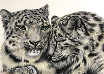 Two Snow Leopards Snuggling