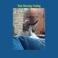General cats pets mornings hangover for-him  personalised online greeting card