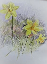 General Daffodils, flowers, yellow, spring, for-her personalised online greeting card