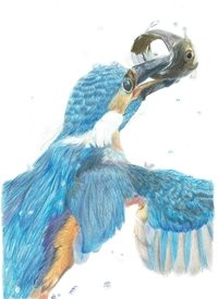 General  greeting cards by Sophie Louise Creates kingfisher, birds, wildlife, animals, nature, fish Gotcha!