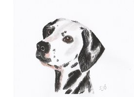 General Dogs Animals  Dalmatian spotted dog  personalised online greeting card