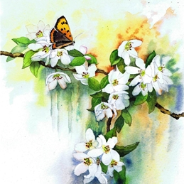 General butterfly, white flower, blossom, orange butterfly, floral, flower personalised online greeting card