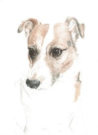 Art jack russell terrier, terrier, dog, animal, pet personalised online greeting card