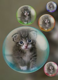 General kittens cats animals  z%a personalised online greeting card