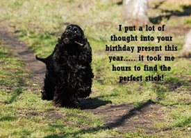 Birthday Cute Dog Spaniel stick  personalised online greeting card
