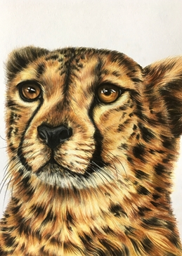 cheetahs cats wildlife animals spots big cats personalised online greeting card