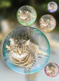 General tabby cats animals z%a personalised online greeting card
