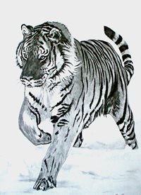 General artwork tiger animals wildlife zoo monochrome for-him for-her personalised online greeting card