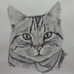 General cat, tabby, black and white  personalised online greeting card