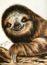Art By Three  Sloth Smiles art sloths animals wildlife  cute smiles zoos her him mum dads kids all occasions for-him for-her for-child personalised online greeting card