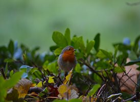 photography  robin animals Autumn Nature z%a personalised online greeting card