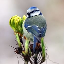 Photography #Blue Tit  #Bird  #wildlife #spring personalised online greeting card