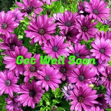 Debbie Daylights Get Well Soon osteospermums well osteospermum flowers purple for-her personalised online greeting card