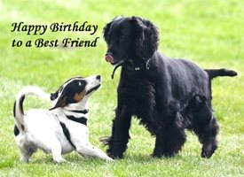 Birthday  Best Friend Dog Cute Spaniel Jack Russell personalised online greeting card