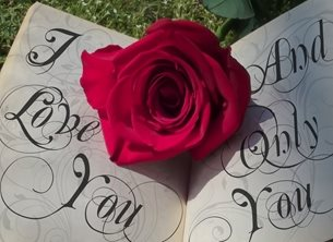 Photography valentines romance rose, book, red, love  anniversary birthday personalised online greeting card