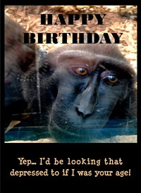 Quirkytags... DEPRESSED MONKEY Birthday Monkey Gorilla Ape Old Funny Hunour  z%a personalised online greeting card