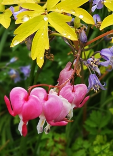 Photography Garden, female, Thank you, pink, pretty, bells personalised online greeting card