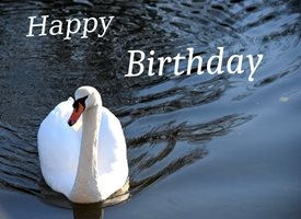 Birthday  sun-setting swan light hope happy hugs celebration  personalised online greeting card