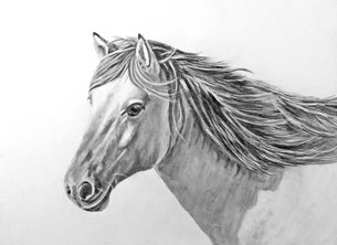 EmilyJane Horse Art artwork horse animals pets monochrome  for-him for-her personalised online greeting card