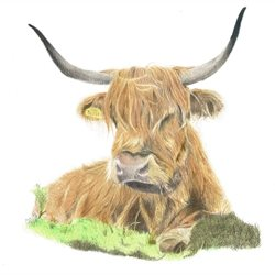 Sophie Louise Creates Dougal General scottish cow, highland cow, cow, scottish wildlife, wildlife, british wildlife, animal, fine art, sophielouisecreates personalised online greeting card