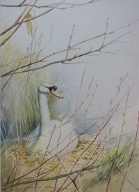 General swan, bird, nest, animals, nature, for-her personalised online greeting card