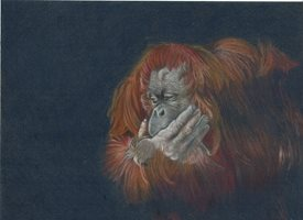 fineart orangutan, ape, wildlife, animal personalised online greeting card