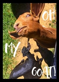 Black Bunny Designs and Greetings Oh My Goat! General goat, funny, silly, barnyard animals, country, farm, meme, sassy, derpy, spring, celebration personalised online greeting card