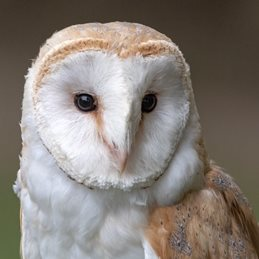 Photography Barn Owl, birds, owls, nature, wildlife, photography  personalised online greeting card