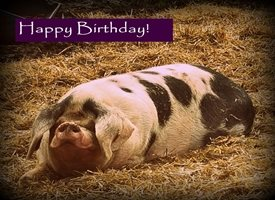 Birthday fun love pig farm animals joy  z%a personalised online greeting card