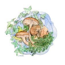 art mushroom picture, fungi, toadstools, blank card, watercolour painting, woodland personalised online greeting card