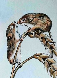 art artwork mice animals wildlife for-her for-him personalised online greeting card