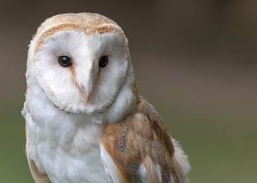 Photography Barn owl, birds, owls, nature, wildlife,, photography  personalised online greeting card
