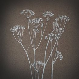 art Cow Parsley drawing fine personalised online greeting card