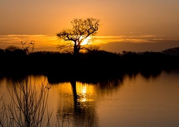Photography Sunrises, landscapes, trees, orange, lakes, sunsets, nature, Attenborough, Nature, Reserve, Nottinghamshire, Nottingham  personalised online greeting card