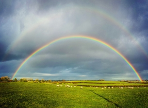 Photography rainbow, sheep, meadow, farm, animals, for-him, for-her, for-children, andbc, newtownards, bangor, sky personalised online greeting card