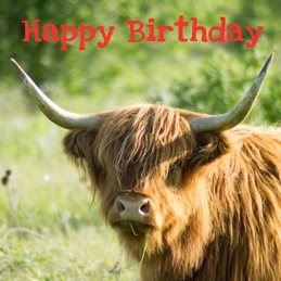 Birthday BIRTHDAY, general, Highland cow animal photography  nature -his personalised online greeting card